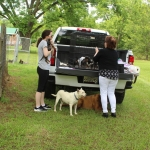 Old Fella Vaccinating puppies on back of pickup truck