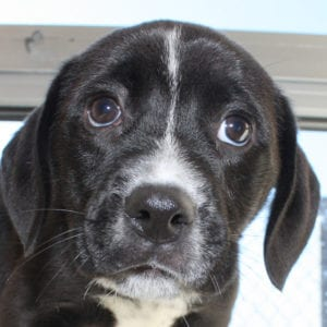 Meet Our Dogs Northeast Animal Shelter