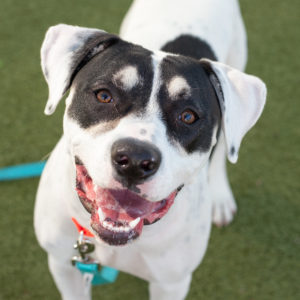 Meet Our Dogs - Northeast Animal Shelter