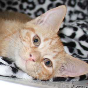 Meet Our Cats - Northeast Animal Shelter